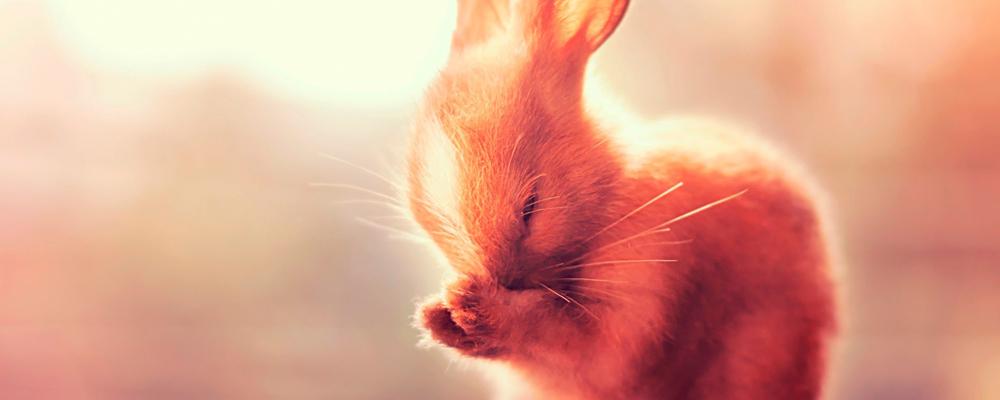 кремация кроликов
