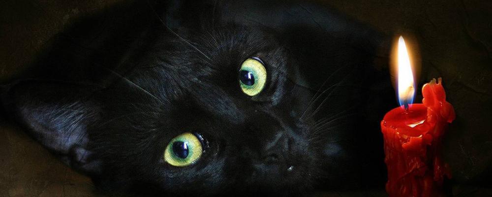 усыпить кота