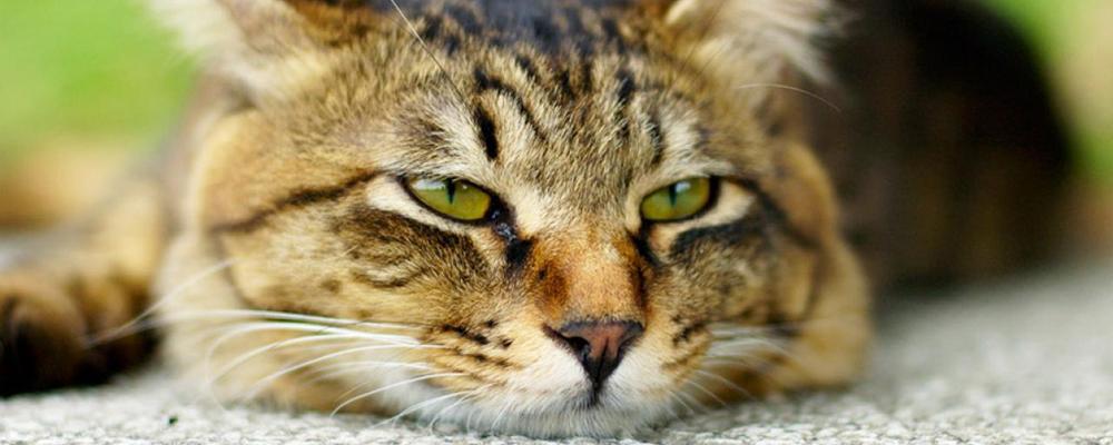 кремация кошек Москва