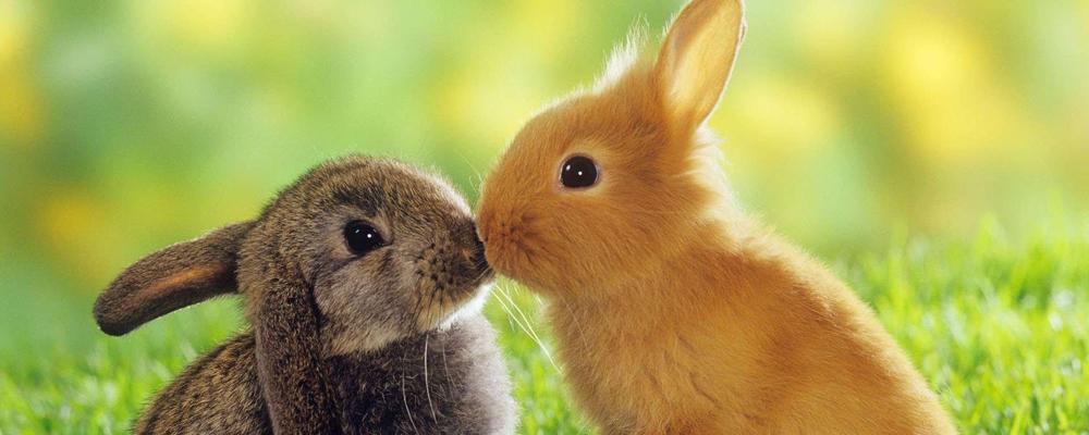 кремация кроликов Москва