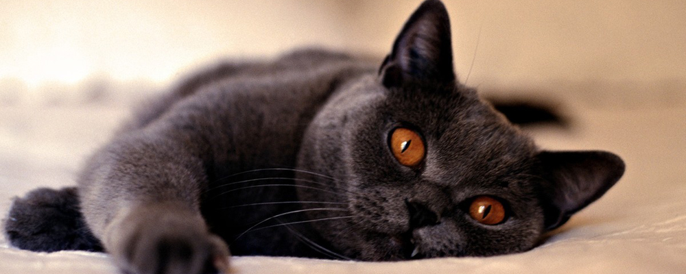 усыпить кошку на дому