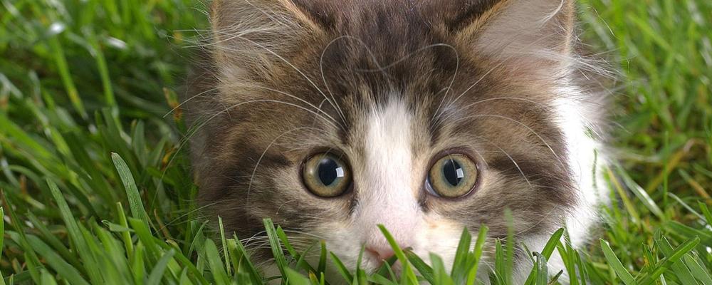индивидуальная кремация кота