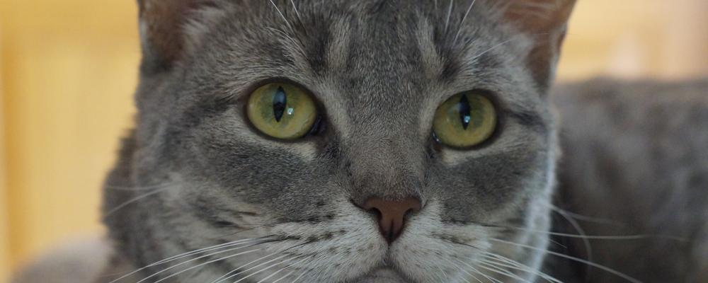 индивидуаьная кремация кота