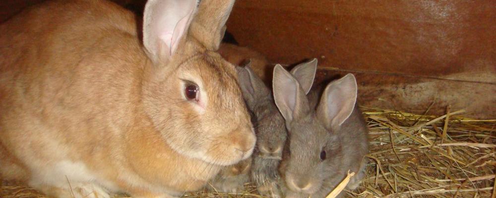 кремация кролика Москва