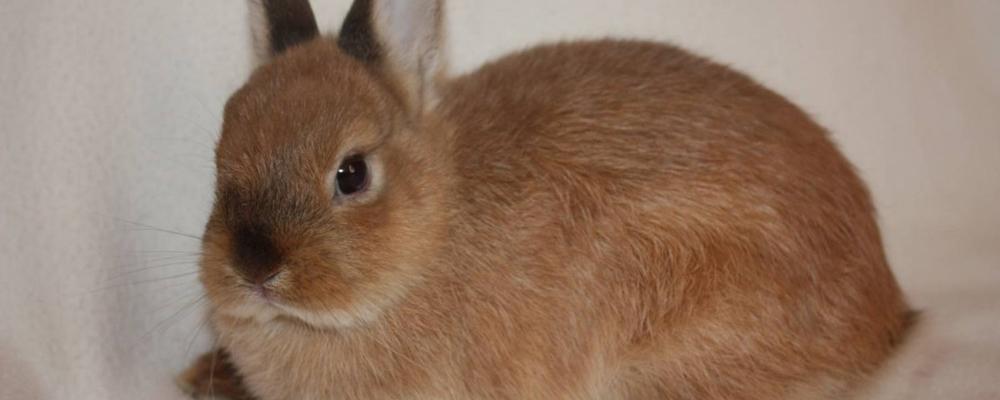 индивидуальная кремация кроликов