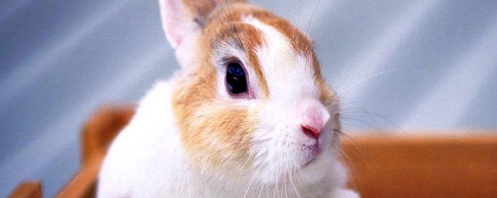 усыпить кролика Москва