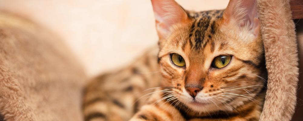 общая кремация кошки