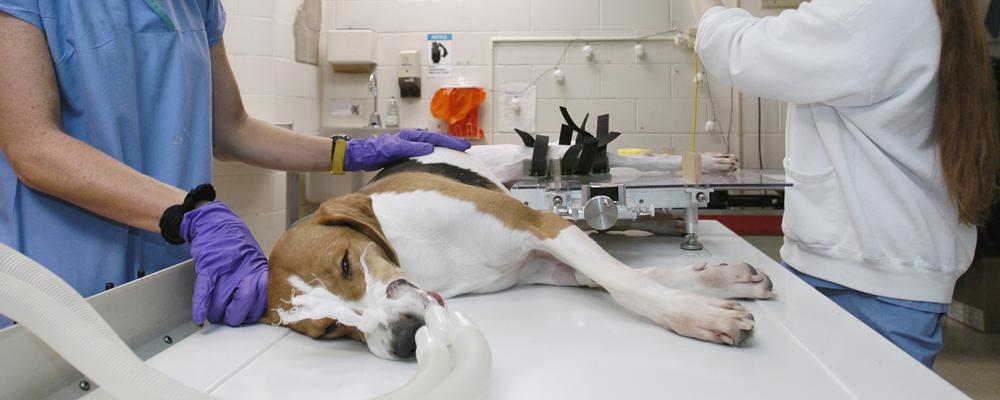 ветеринарные услуги Москва