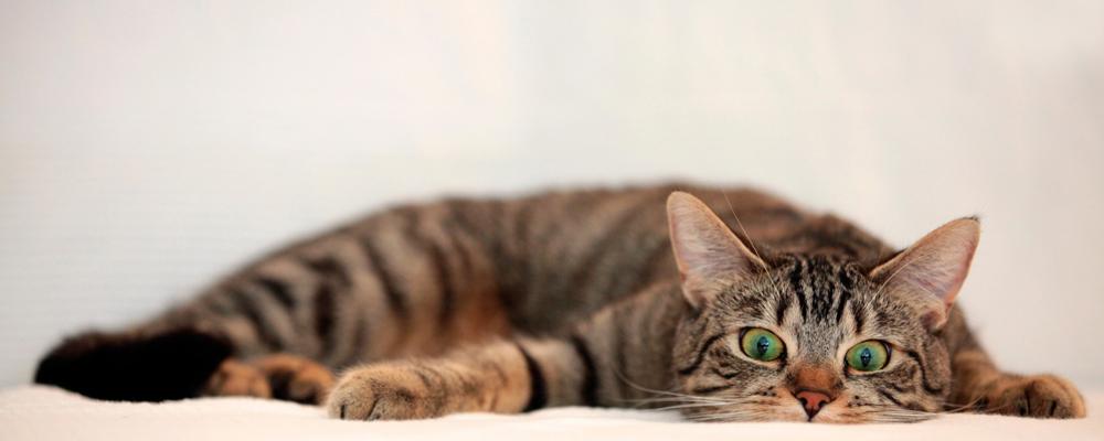 ветеринар для кота Москва