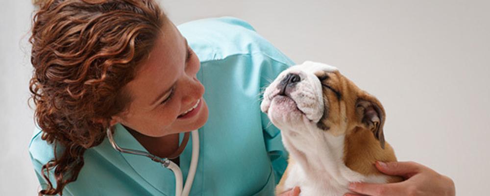 ветеринар Москва
