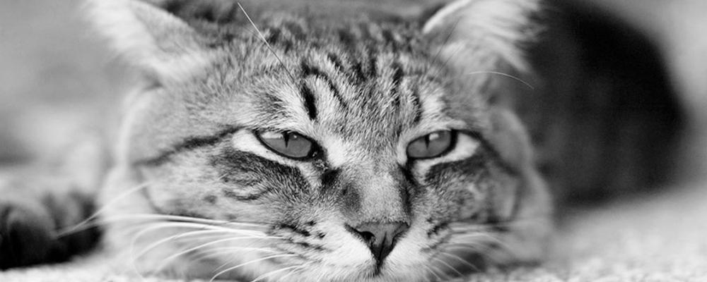 усыпление кота Москва