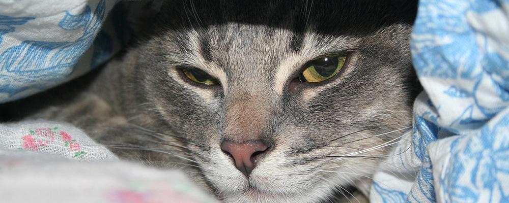 Вызов ветеринара на дом для кота